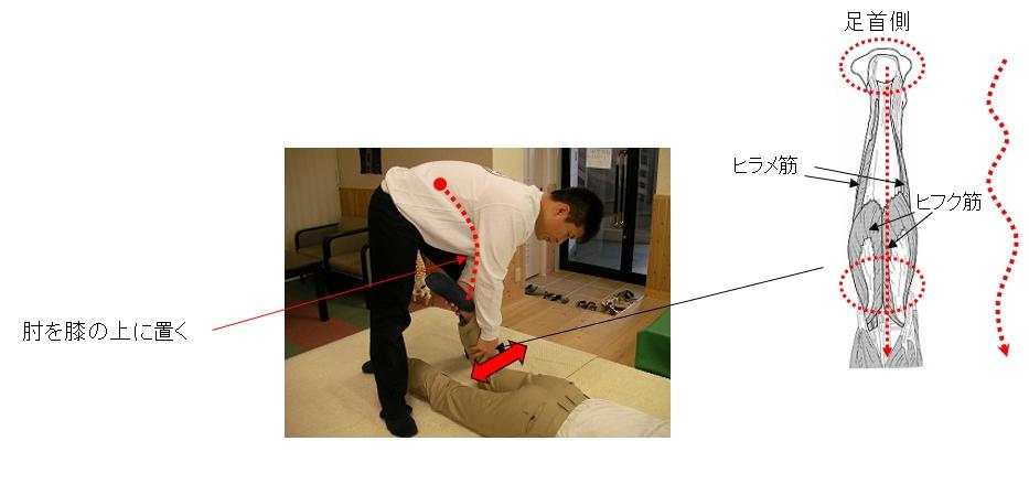 基本腰痛アプローチ法<伏臥位膝屈曲片足脹脛筋ウェーブ法>