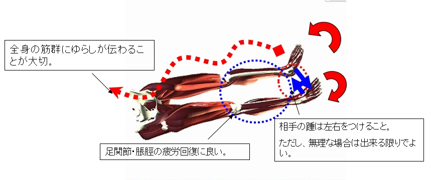 手順その4(仰臥位/主に前面の椎間板へのアプローチ)