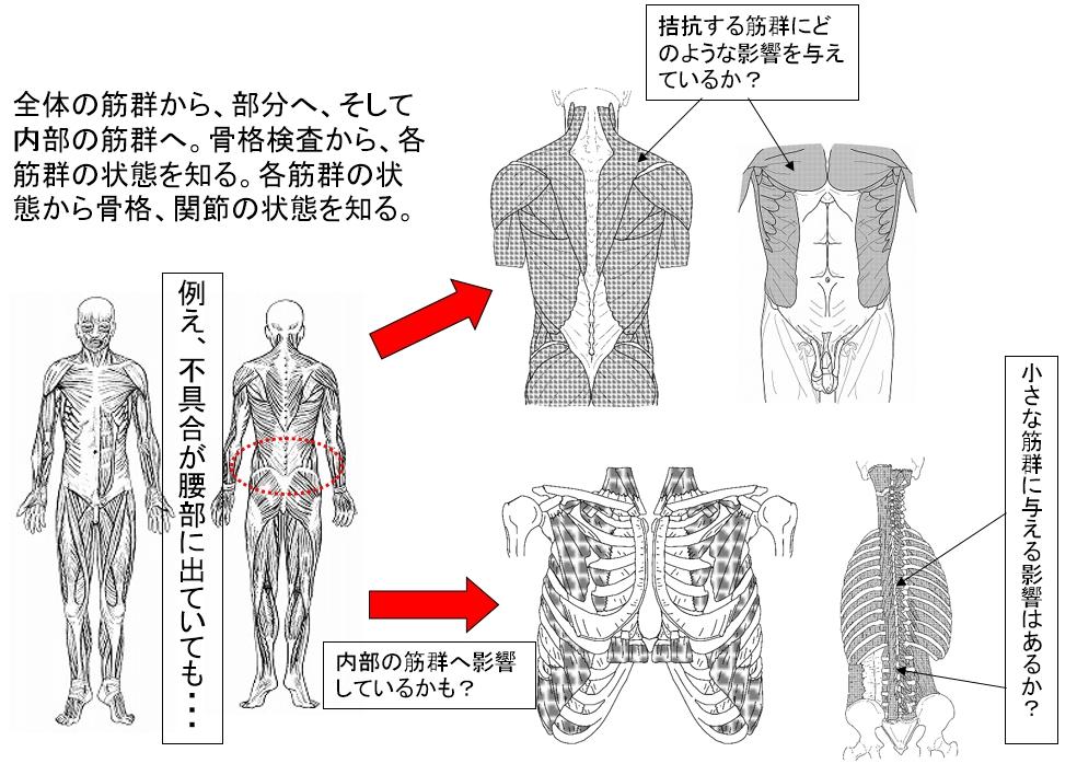 腰部前屈痛の検査のポイント⑤