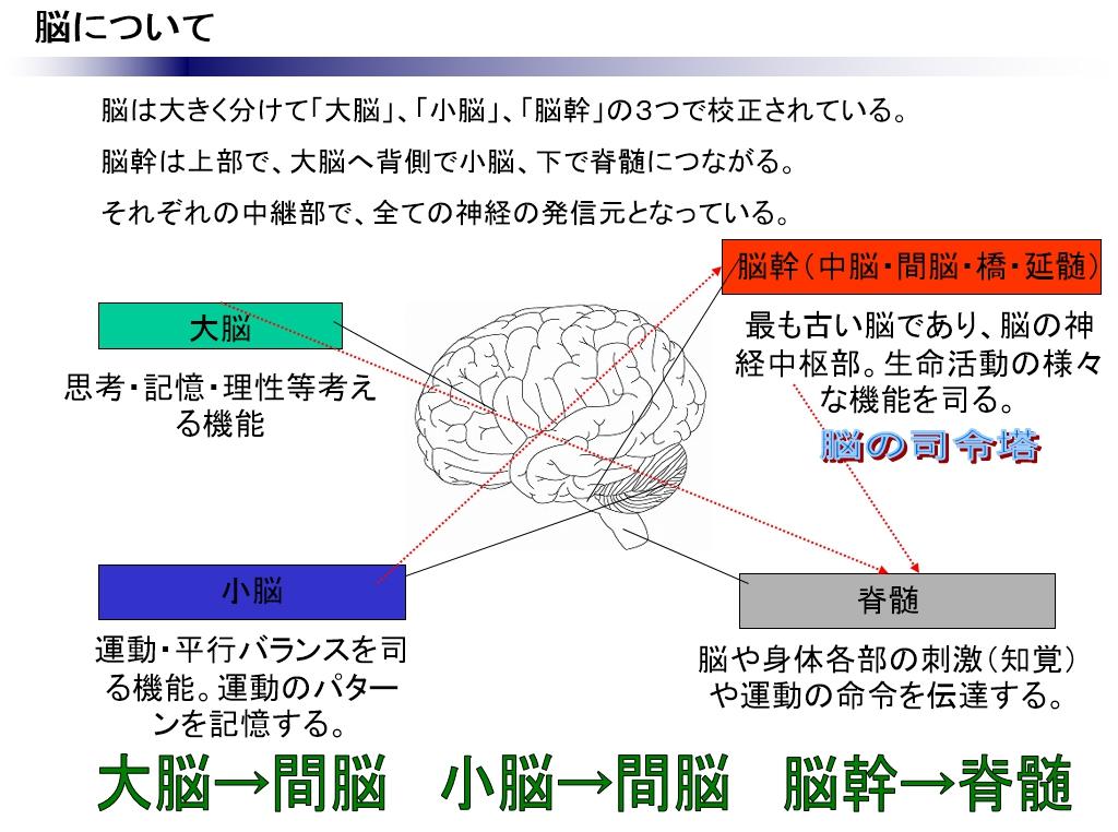 身体と脳(心)の関係