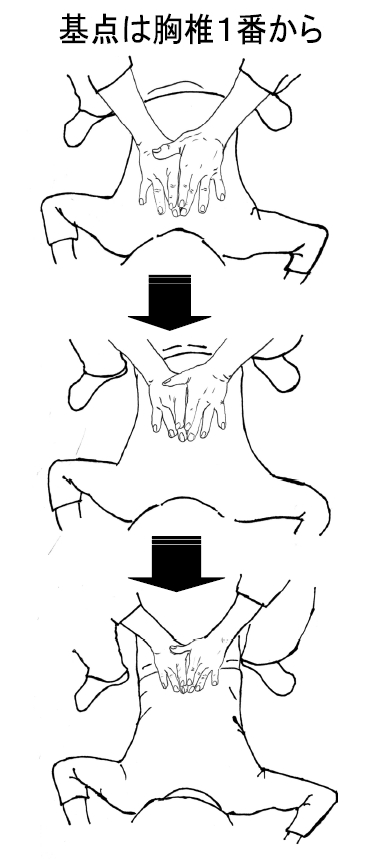 胸椎1 番から下方へ棘突起を両手中指 を挟み込むように無理なく棘突起の位 置関係を頭に入れながら検査する。