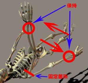 上腕(肩関節)の前方変位2
